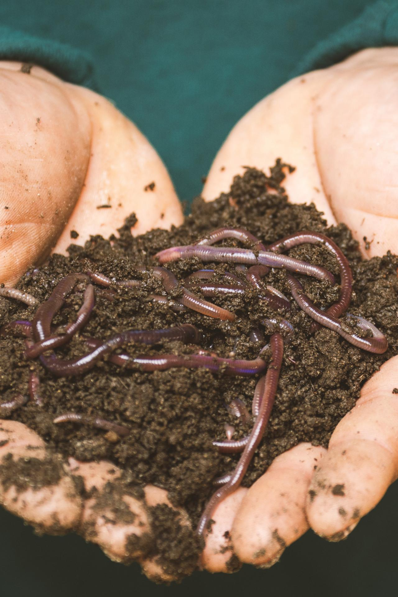 person-holding-dirt-and-worms-in-hands