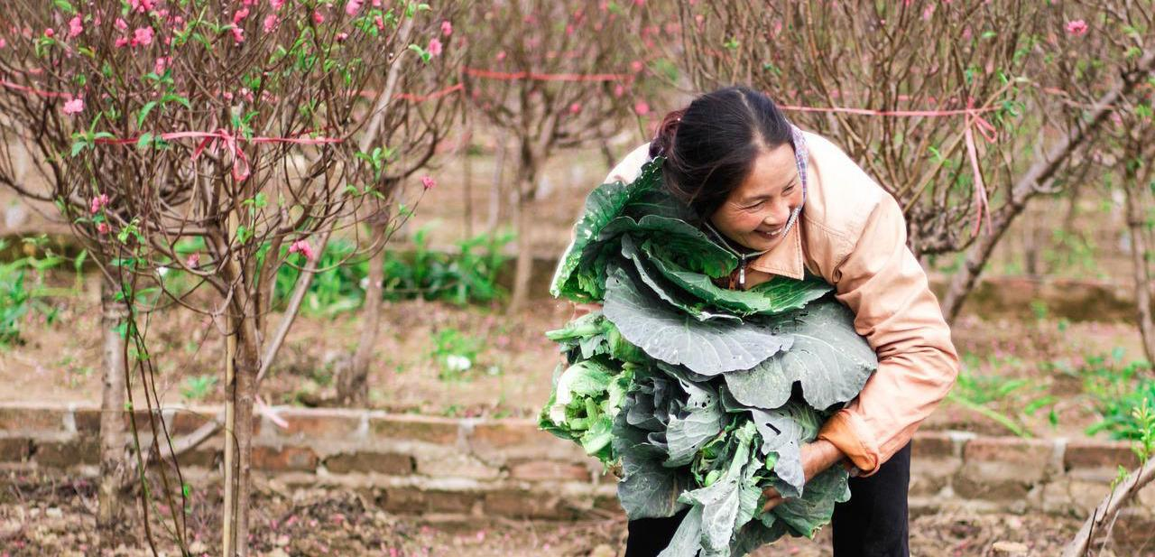 Woman picking vegetables in garden
